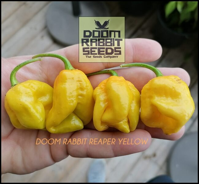 Doom Rabbit Reaper Yellow