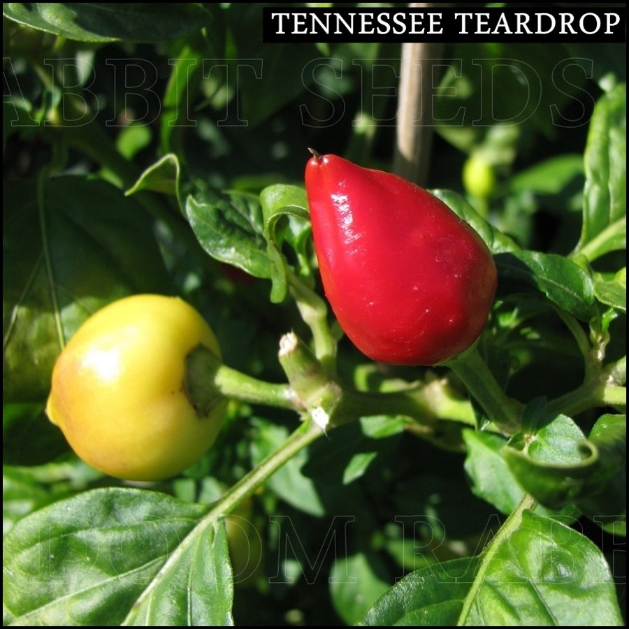 Tennessee Teardrop