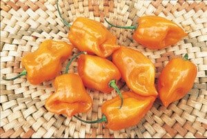 Scotch Bonnet Orange