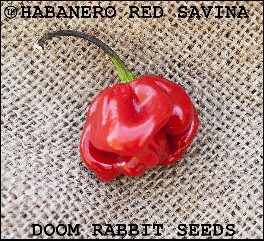 Habanero Red Savina