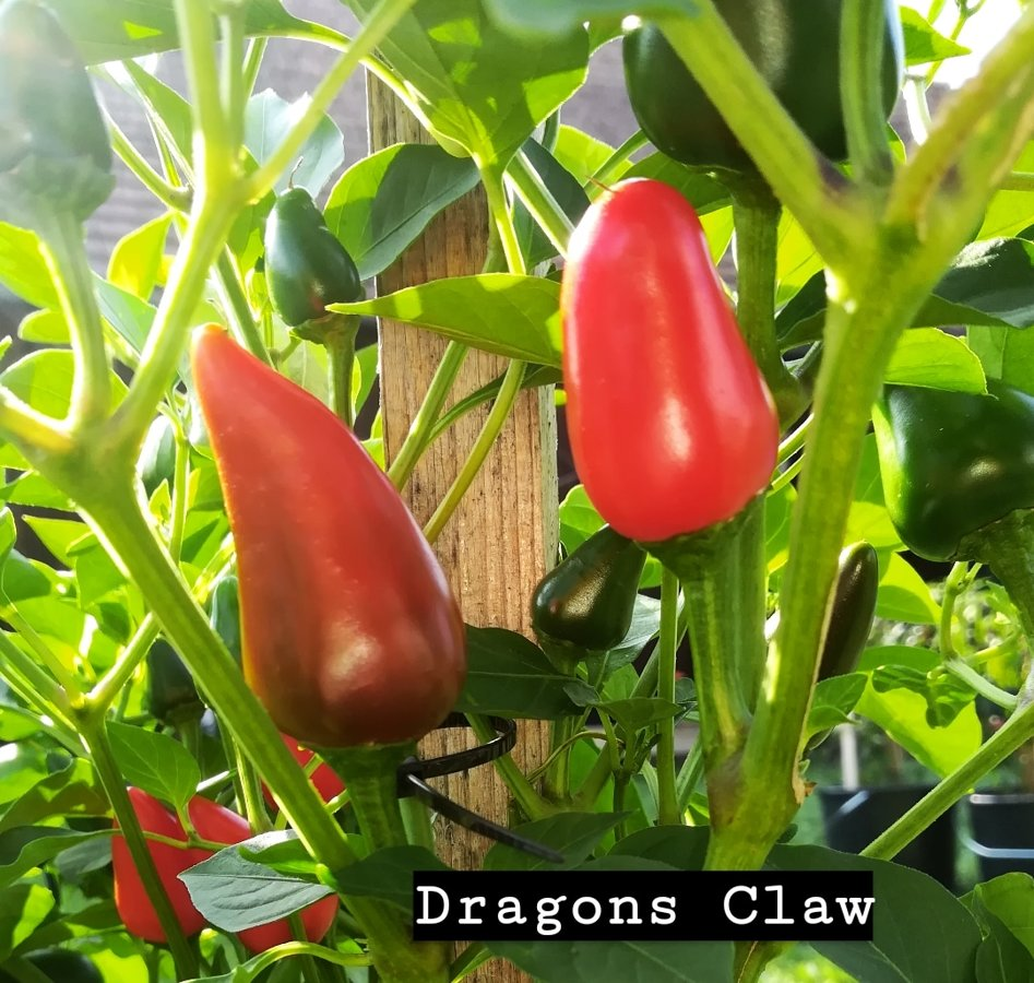 Dragons Claw